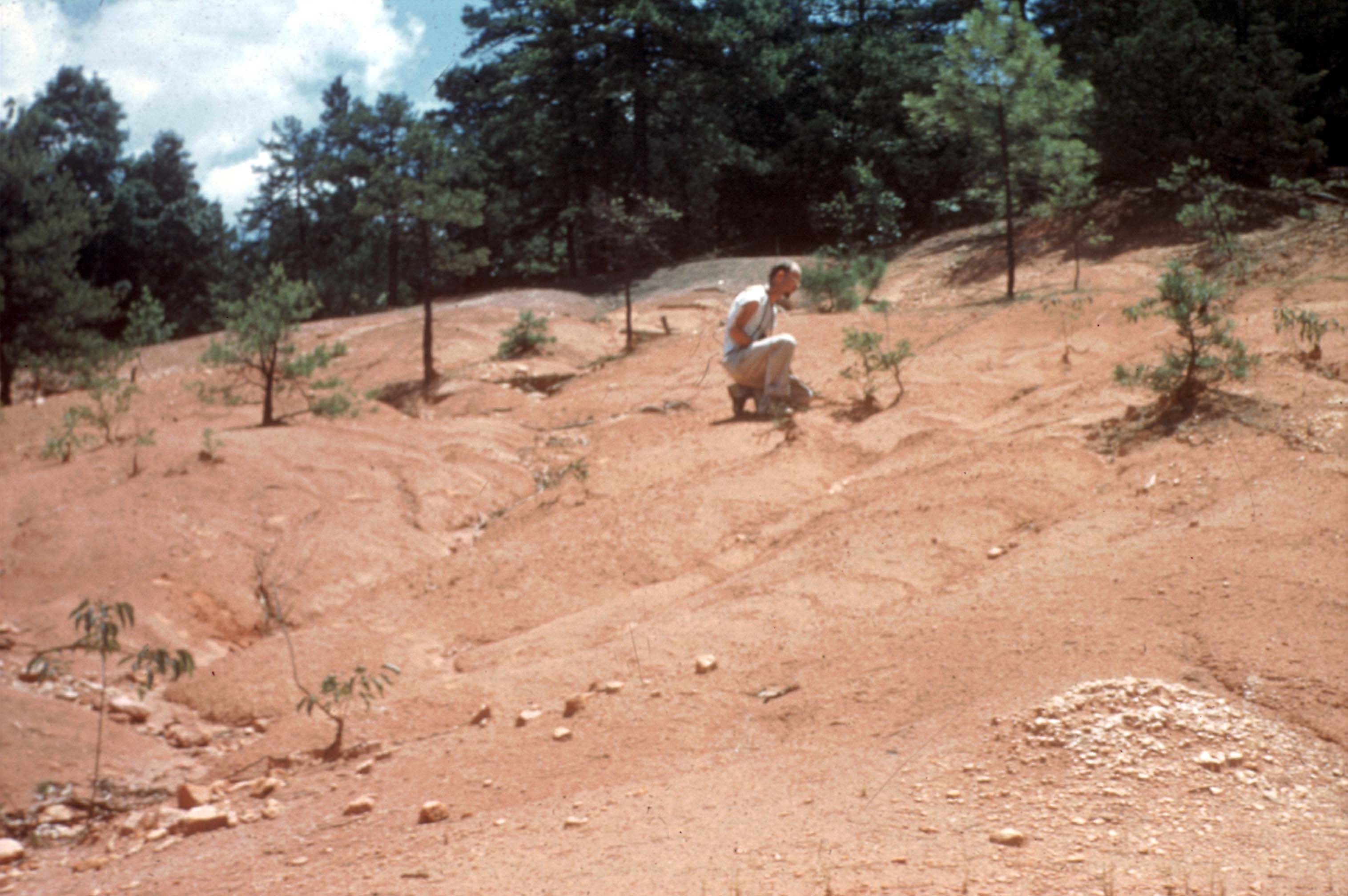 Calhoun Critical Zone Observatory before replanting of trees